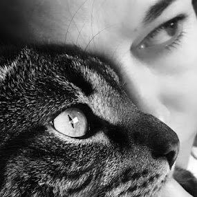 by Ana Maria De Figueiredo - Animals - Cats Portraits