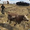 Animal Transport - Truck Driver Simulation