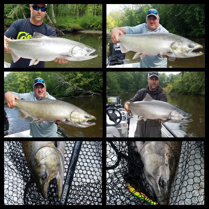 Pere Marquette River King Salmon Fishing