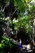 Photo: Le chemin de promenade est agrémenté de panonceaux qui vous renseignent sur les essences, leur origine, leurs caractéristiques.