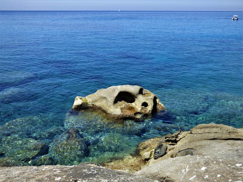 Teschio dell'isola d'Elba di 1marti2