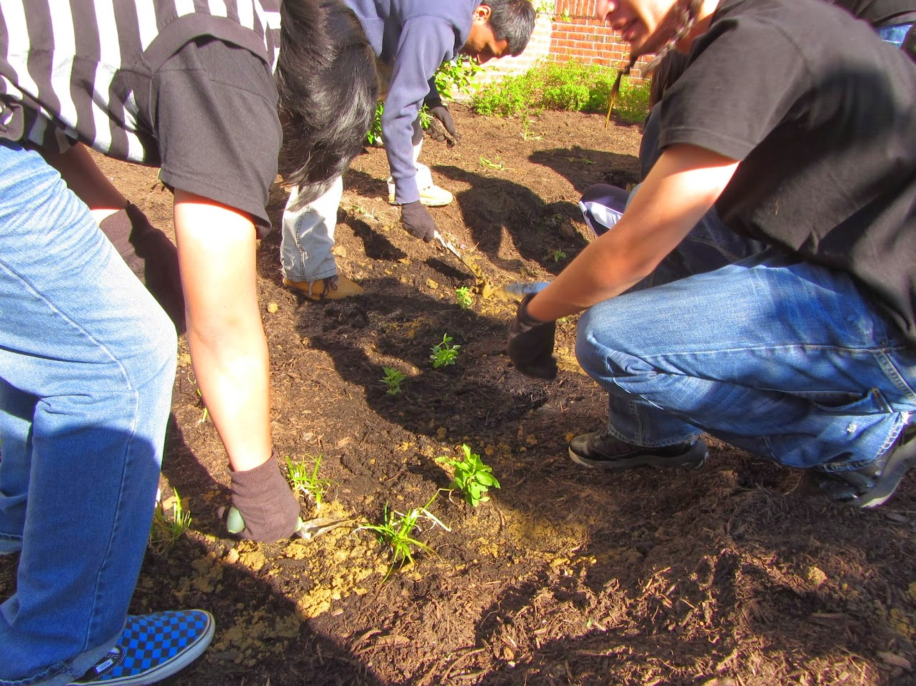 Urban Promise Academy Rain Garden Photo Gallery
