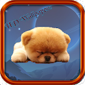 Puppies HD Wallpapers icon