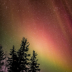 Rainbow Aurora by Heather Campbell - Landscapes Starscapes ( winter, night photography, stars, northern lights, aurora borealis, aurora, astrophotography, long exposure,  )
