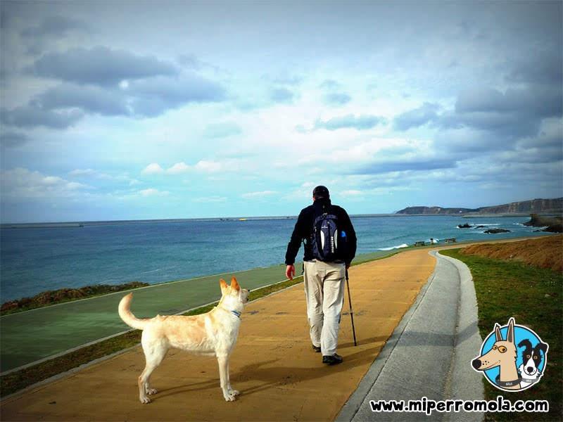 Senderismo con Perro Sendero Azul de Arteixo (Sabón-Barrañán), A Coruña con un Can de Palleiro y un Border Collie