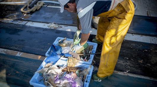 Con frecuencia en las redes hay más plástico que pescado