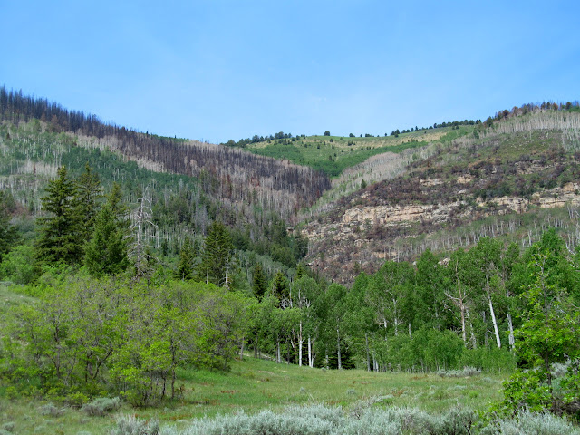 Burn area on Lowry Top
