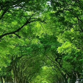 Greenery by Praveen Kumar - Nature Up Close Trees & Bushes