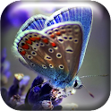Macro Butterfly Live Wallpaper icon