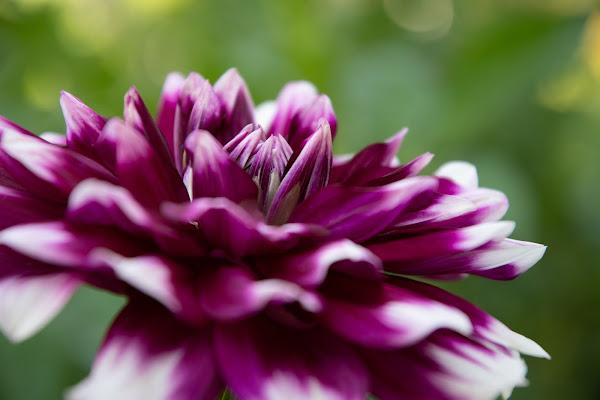 fiore di Matteo Masini