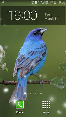 Spring Birds Live Wallpaper - screenshot