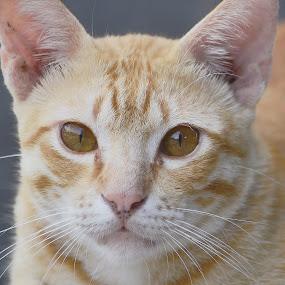 Pets by Wahid Hasyim - Animals - Cats Portraits ( potrait, cat, pet, nikon, photo, photography, animal,  )