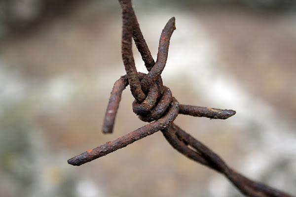 Ruggine su filo spinato di IlariaInnocenti