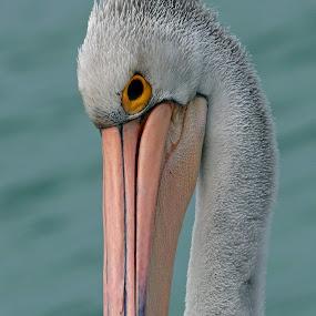 Hello by Simon  Rees - Animals Birds