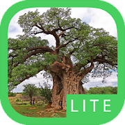 App Icon for eTrees of Southern Africa Lite App in Czech Republic Google Play Store