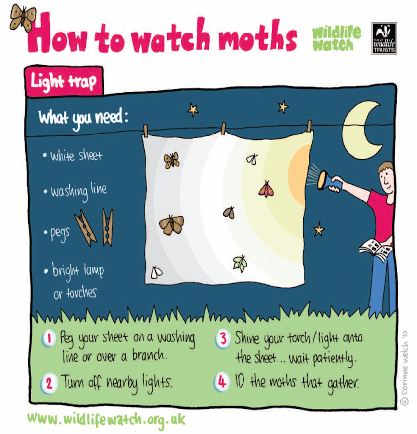 Moth watching