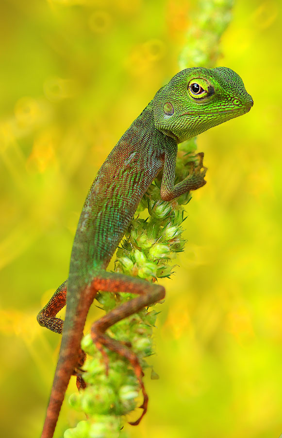 I am .... by Wewey Cheptady - Animals Reptiles