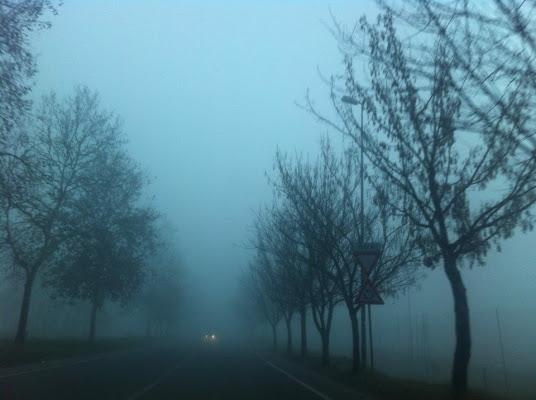 Nebbia  di griunical