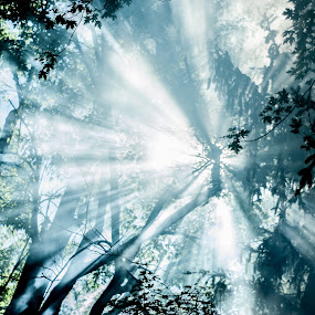 Sun tracying beams of light through trees by Florin Marksteiner - Nature Up Close Trees & Bushes ( foggy, fog, foliage, sunrays, shine, forest, sun, smoke,  )