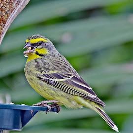 Feeding time  by Johann Bekker - Novices Only Wildlife