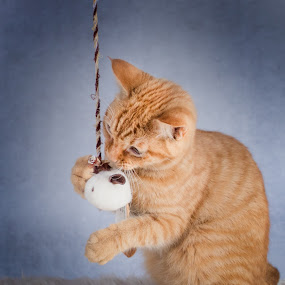 Boots by Patricia Konyha - Animals - Cats Playing (  )