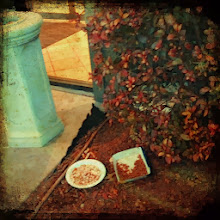Photo: A little treat left outside the hotel for the neighborhood kitties! Really....