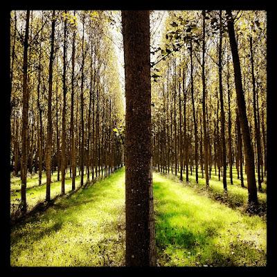 Trees di ale86