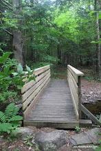 Photo: Follow the bridge into the forest at Lowell Lake State Park by Jess Lubas
