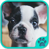 Cute Dog Games free