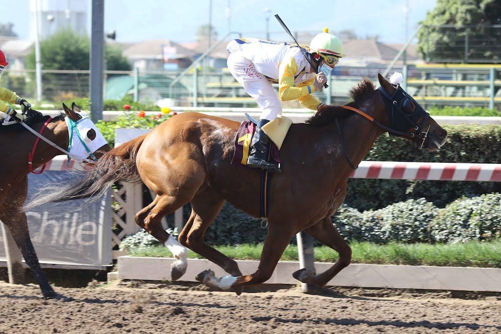 Il Sognatore (Rock of Gibraltar) gana Handicap (1200m-Arena-HCH).