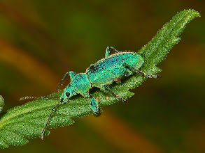 Photo: Green on Green