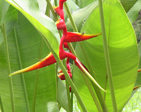 Photo: Day 323 -  Heliconia Flower