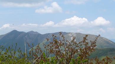 Photo: ミネザクラ(バックは大倉山方面)