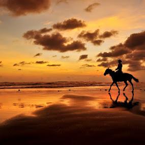 Horse of Sunset by Petrus Arif - Animals Horses