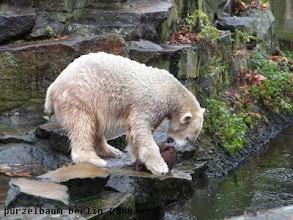 Photo: Knut nimmt sich den Jutesack vor ;-)
