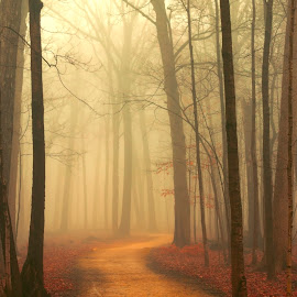 A Walk in Fog by Sue Matsunaga - Landscapes Forests