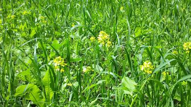 Photo: Gelbe Inseln im grünen Meer (beim Eisenwerk Geweke).