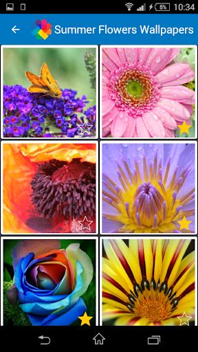 여름 꽃 배경 화면