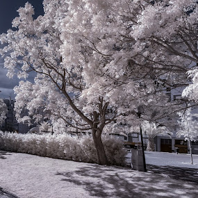 In the back of my house there is a park.... by Carlos Cardoso - City,  Street & Park  City Parks ( ir, park, back, house )