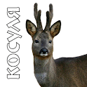 Decoys on roe deer icon