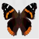 ButterFlyPix icon