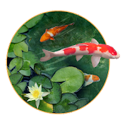 App Koi Fish live Wallpaper APK for Windows Phone