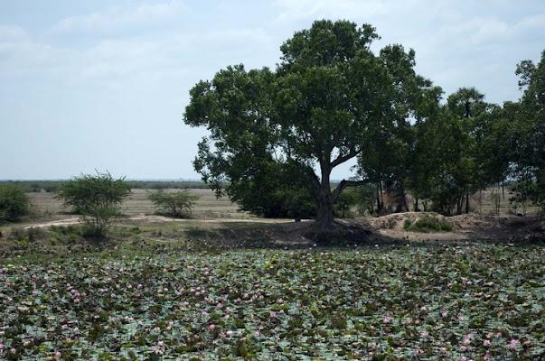 Paesaggio indiano di maryola