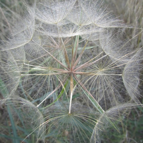 Natural stars by Lyn Simuns - Nature Up Close Other plants ( fall, nature, up close, plant, fuzzy )