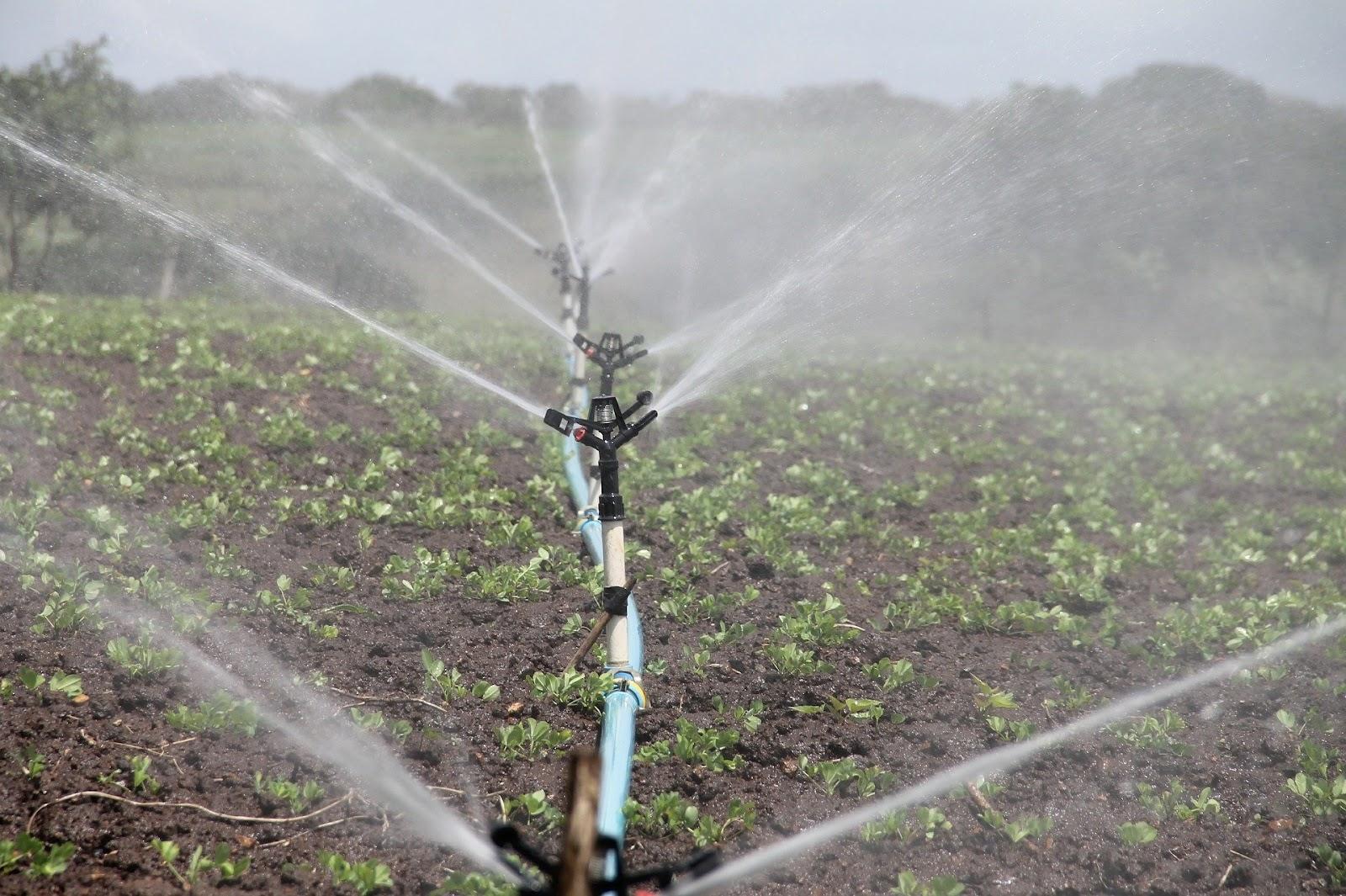 Escassez de água tem impactado lavouras em diversas regiões do País. (Fonte: Pixabay/Reprodução)