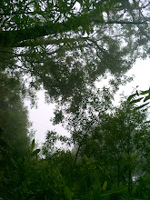 Photo: Bay canopy providing a light shower for the understory below