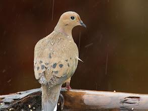 Photo: Mourning Rains
