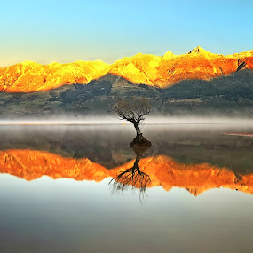 Three Willows by Jomy Jose - Landscapes Waterscapes ( queenstown, hannahsdreamz, willows of glenorchy, jomyjose, glenorchy )