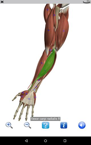 Visual Anatomy Free Screenshot