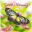 Good Morning Daily Greetings icon